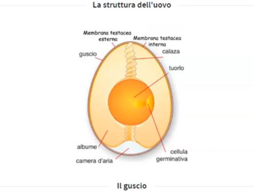 L'uovo di gallina e la maionese